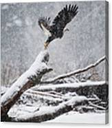 Eagle Takeoff In Snow Canvas Print