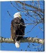 Eagle Watch Canvas Print