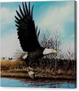 Eagle With Decoy Canvas Print