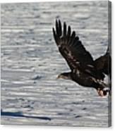 Eagle_7894 Canvas Print