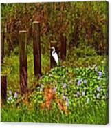 Egret And Heron Canvas Print