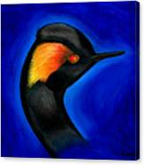 Eared Grebe Duck Canvas Print