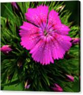 Early Bloomer Canvas Print