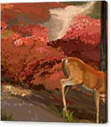 Early Fall Whitetail Canvas Print