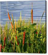 Early Morning Cattails Canvas Print