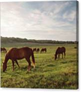 Early Morning Graze Canvas Print