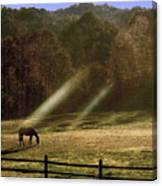 Early Morning Grazing Canvas Print