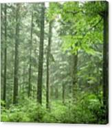 Early Morning In Swiss Forest Canvas Print