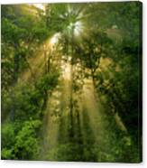 Early Morning Peace Canvas Print