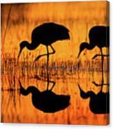 Early Morning Sandhill Cranes Canvas Print