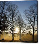 Early Morning Sunrise Through Trees And Fog Canvas Print