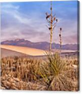 Early Morning Yucca - White Sands - New Mexico Canvas Print