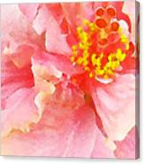 Early Pink Hibiscus Canvas Print