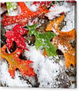 Early Snow During Autumn  Canvas Print