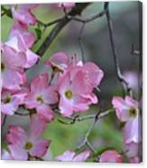 Early Spring Color Canvas Print