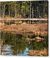 Early Spring Marsh Canvas Print