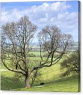 Early Spring On Steryning Bowl Canvas Print
