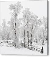 Early Spring Snow Canvas Print