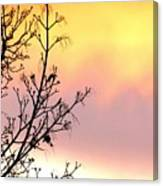 Early Spring Sunset Canvas Print