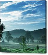 Early Summer Morning  Canvas Print