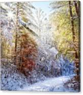 Early Winter's Walk Canvas Print