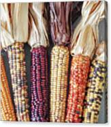Ears Of Indian Corn Canvas Print