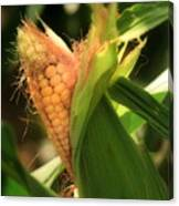 Ear's To You Corn Canvas Print