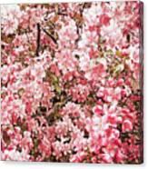 Earth Tones Apple Blossoms  Canvas Print