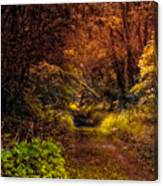 Earth Tones In A Illinois Woods Canvas Print