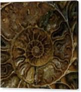 Earth Treasures - Brown Amonite Canvas Print