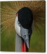East African Crowned Crane Upclose Canvas Print