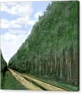 East Texas Pine Cut Canvas Print