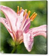 Easter Lily 1 Canvas Print