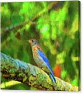 Eastern Blue Bird With Flair Canvas Print