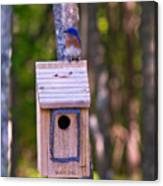Eastern Bluebird Perched On Birdhouse 4 Canvas Print