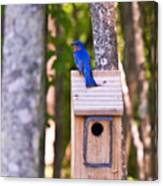 Eastern Bluebird Perched On Birdhouse Canvas Print