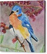 Eastern Bluebird Vertical  Canvas Print