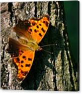 Eastern Comma Butterfly Canvas Print