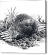 Eastern Mole Canvas Print