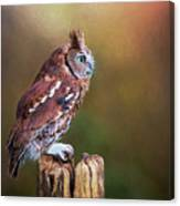 Eastern Screech Owl Red Morph Profile Canvas Print