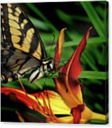 Eastern Tiger Swallow Tail Butterfly Canvas Print