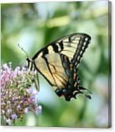Eastern Tiger Swallowtail 2 Canvas Print