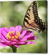 Eastern Tiger Swallowtail 2016-1 Canvas Print