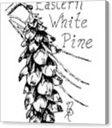 Eastern White Pine Cone On A Branch Canvas Print