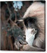 Eating Monkey Canvas Print