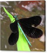 Ebony Jewel Damselfly Canvas Print