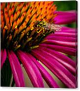 Echinacea And Syphrid Canvas Print