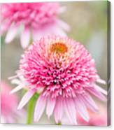 Echinacea Butterfly Kisses Canvas Print