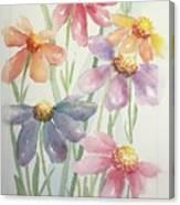 Echinacea Cheyenne Spirit Canvas Print
