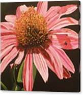 Echinacea Flower Canvas Print